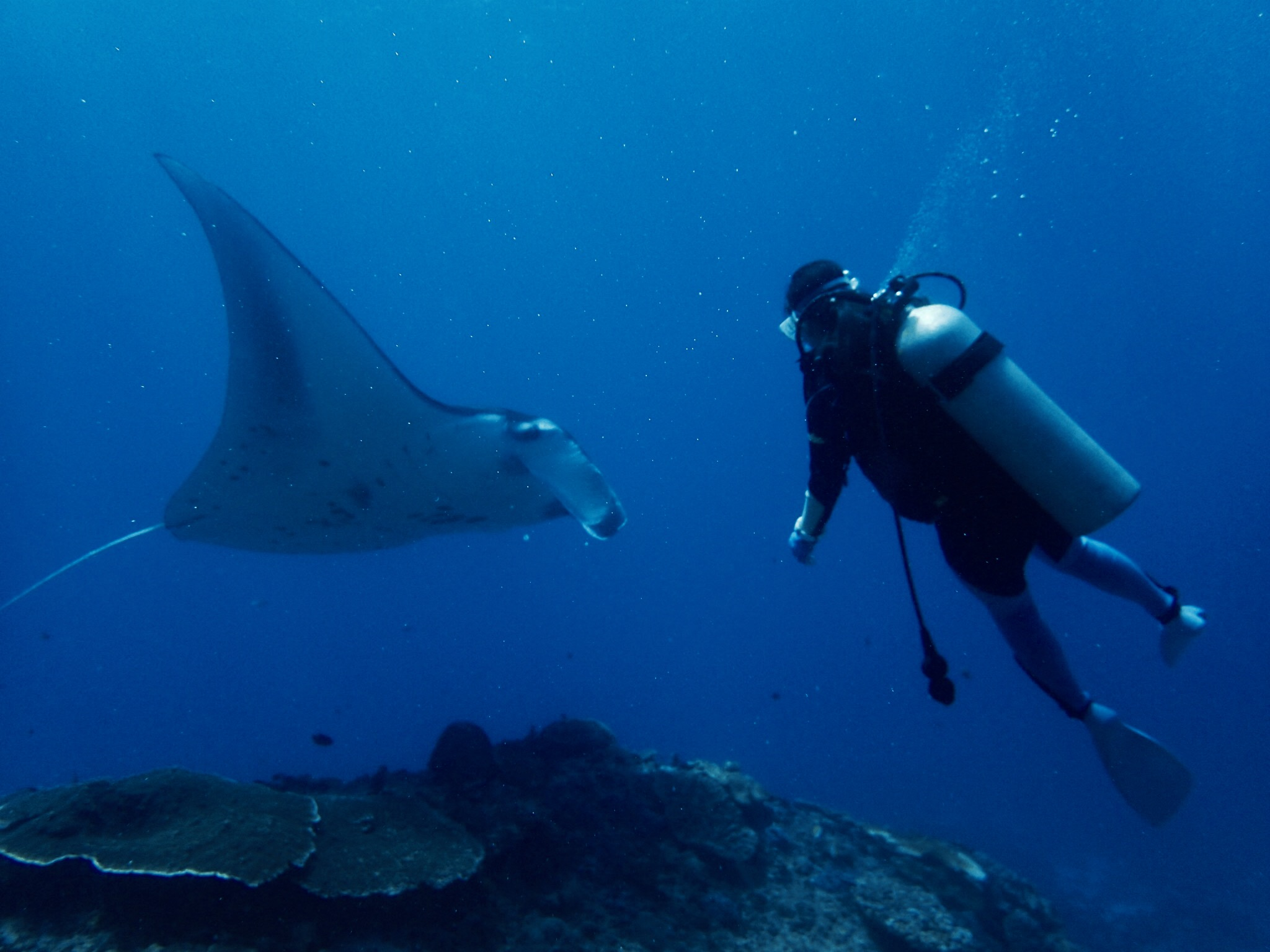 11月のダイビング「南国インドネシアでドリフトダイブ」