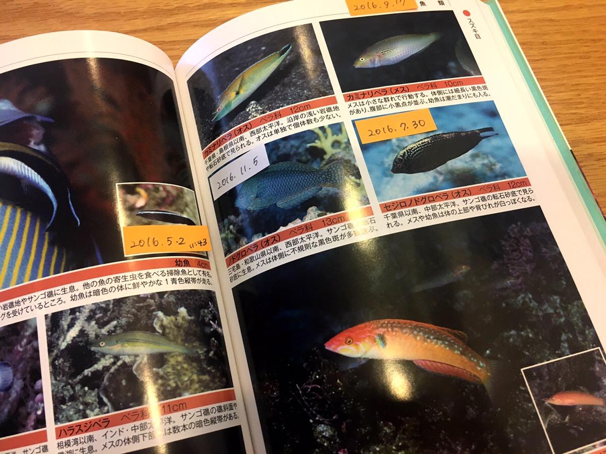 ダイビング中に見た魚の名前を調べる!同定の方法