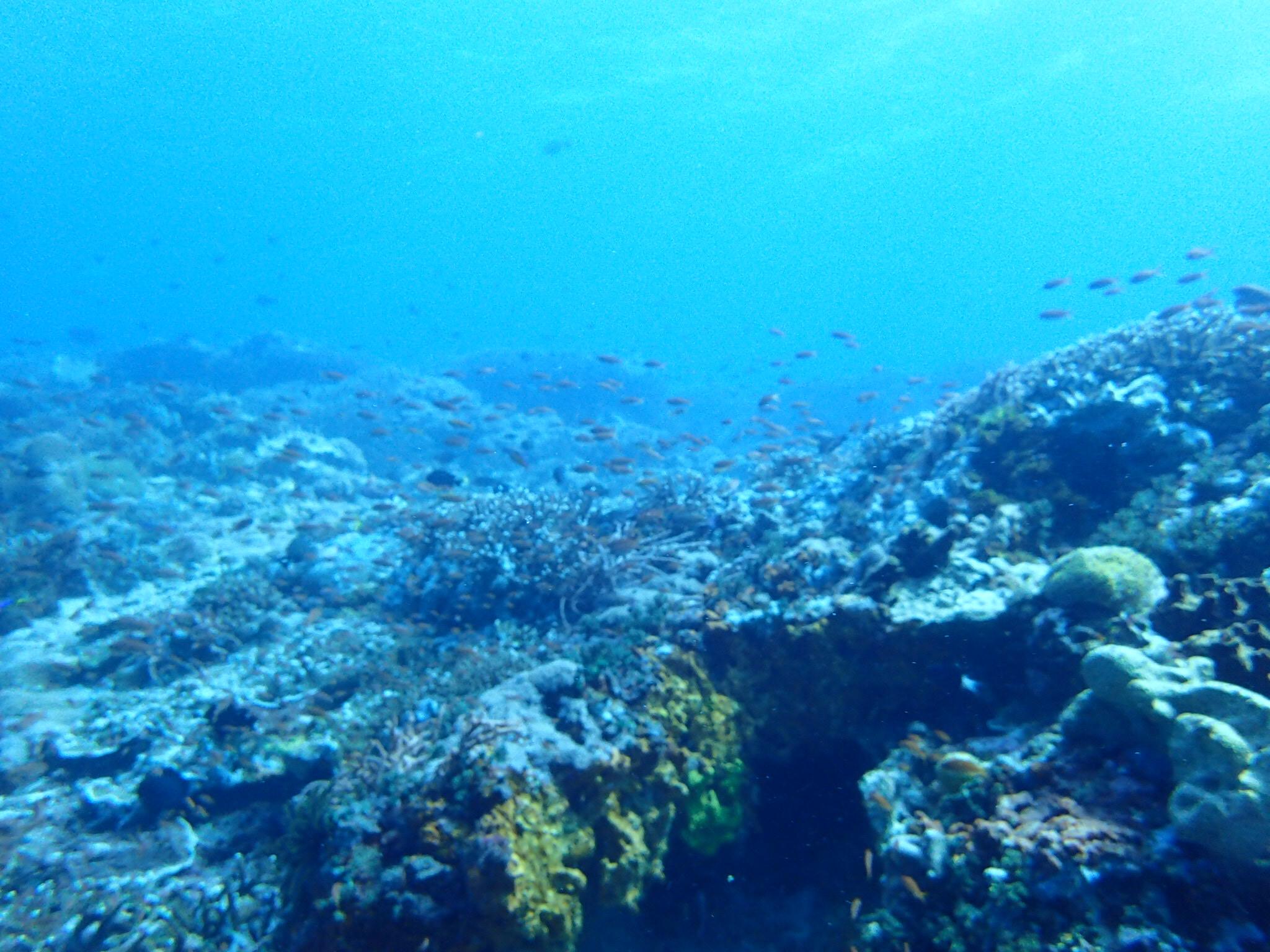 世界の美しい360度ダイビング動画とアクションカメラ
