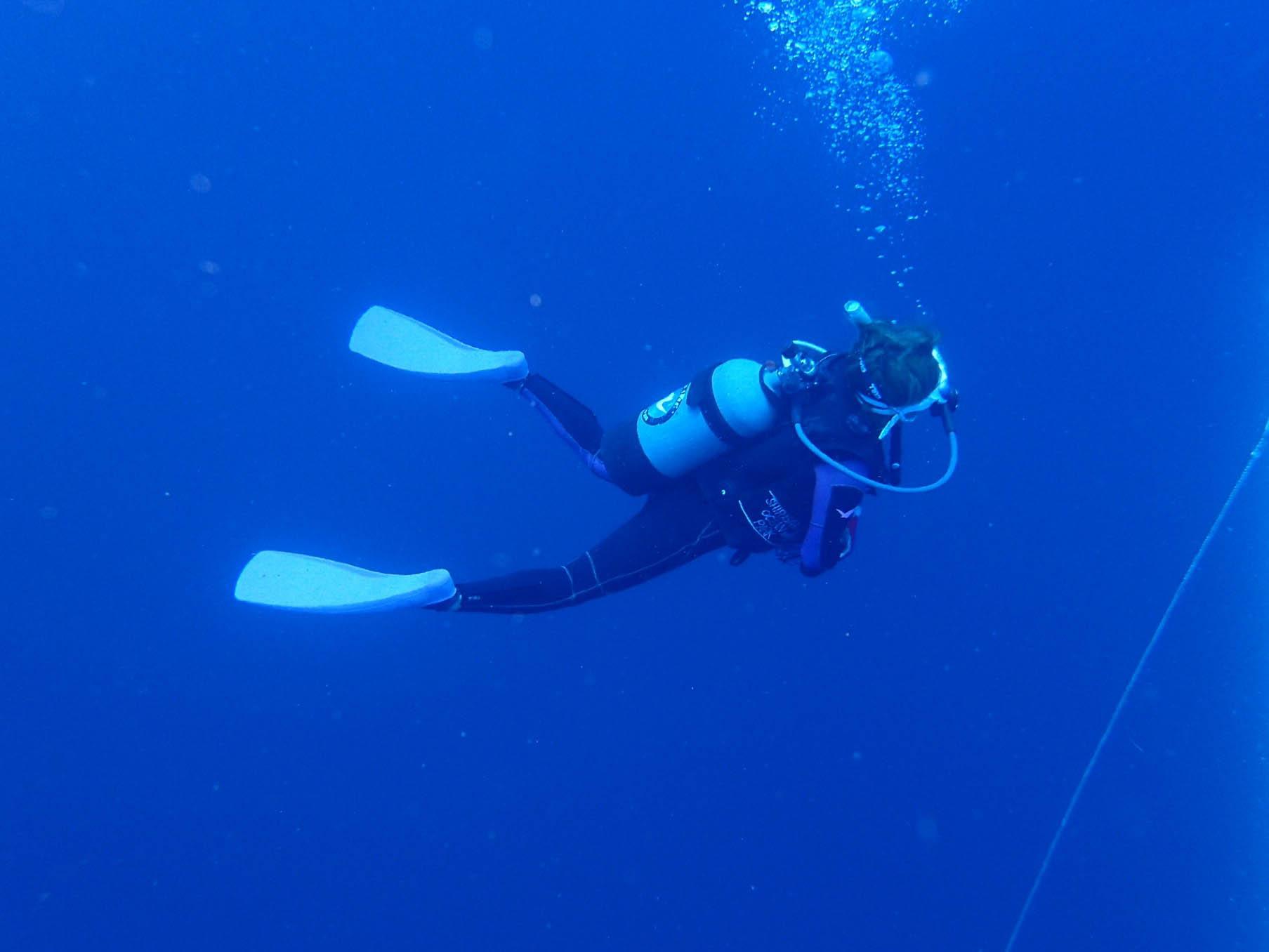 8月のダイビング「ネコザメ、イサキ大群と黒潮ドリフトダイブ」